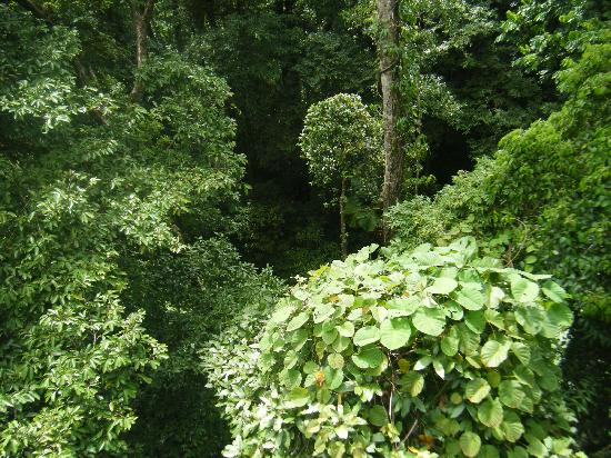 Canopy research is key to understanding rainforests
