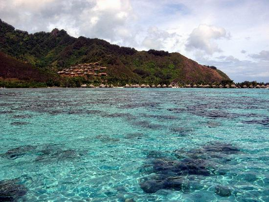 Cook's  Bay, French Polynesia: On our Liki Tiki tour to feed sharks