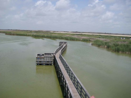 Port Aransas, Τέξας: Bird Sanctuary