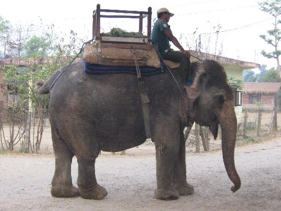   : elephant on her way to work