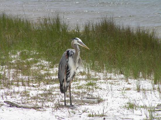 Gulf Shores Plantation: Great bird watching in the area
