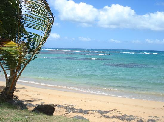 Palm Trees Picture Of Luquillo Beach El Yunque National Forest Tripadvisor