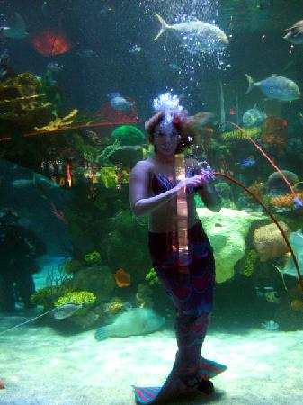 Silverton Hotel and Casino: The mermaid swims with the fishes