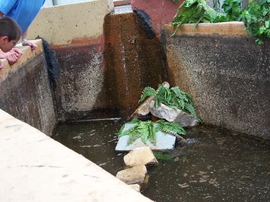 Disgusting Water Fake Plants Nasty Wall Picture Of