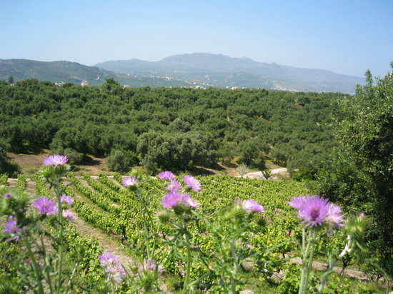 Chania Town, Greece: Vineyards of West Crete