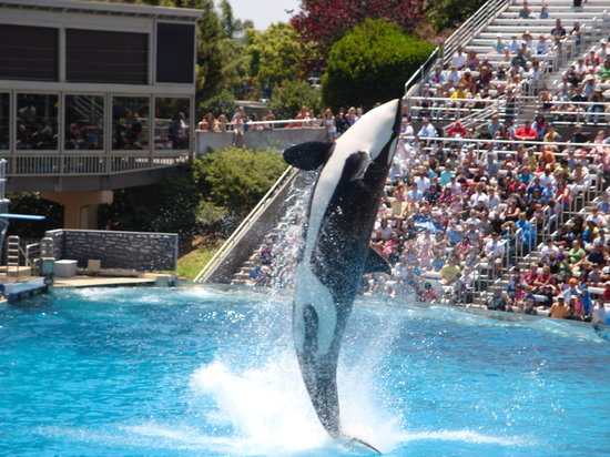 San Diego, Californien: Shamu at SeaWorld