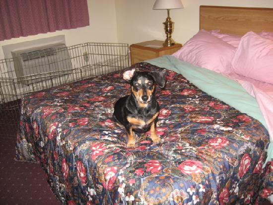 Days Inn Eureka Springs: Lucy, lounging on vacation.