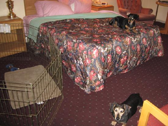 Days Inn Eureka Springs: Plenty of room for a dog pen.