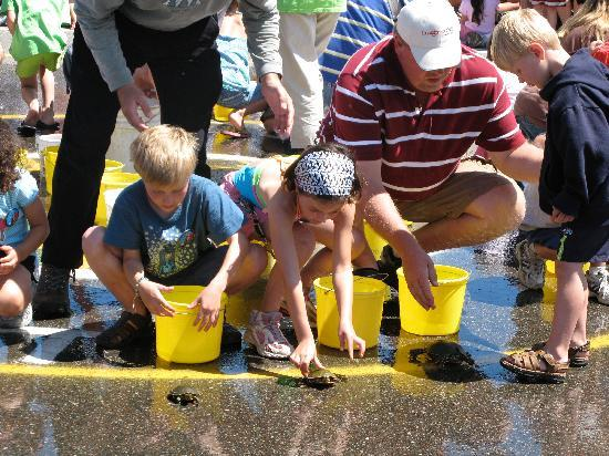 Good Ol' Days Family Resort: Turtle races in Nisswa
