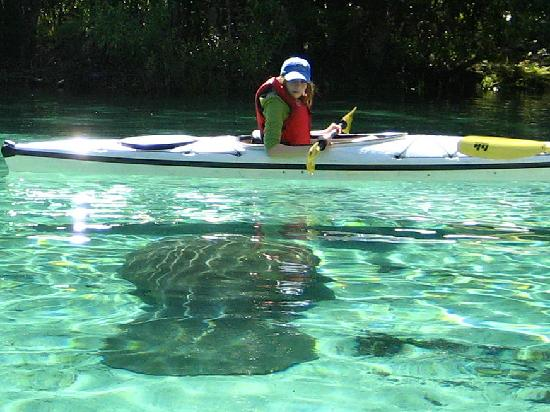 Crystal River Florida Kayak Tours