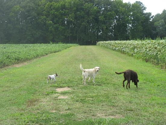 Inn at Huntingfield Creek : Java, Jesebel, and Gracie