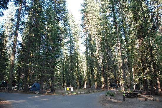 Stony Creek Campground: A nice overall, general view of the grounds