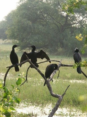 Bharatpur Photo