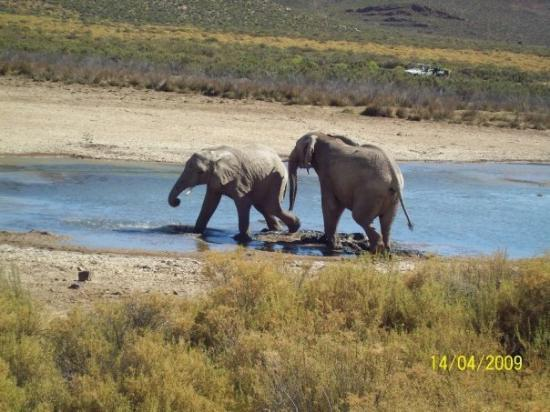 Touwsriver, South Africa: Muddy play time at the wter hole