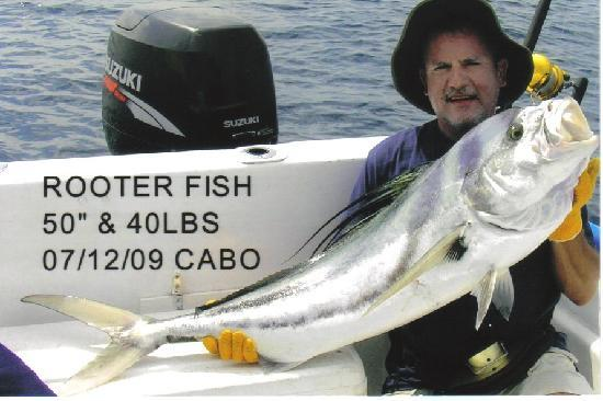 My first rooster fish picture of cabo san lucas los for Rooster fish cabo
