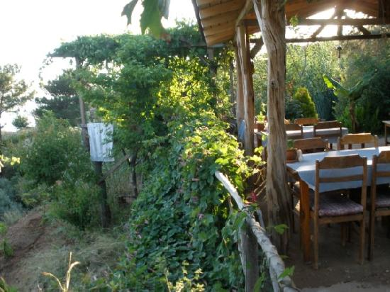 Olive Garden At Kabak Swimming Pool Again Picture Of Olive Garden Kabak Faralya Tripadvisor