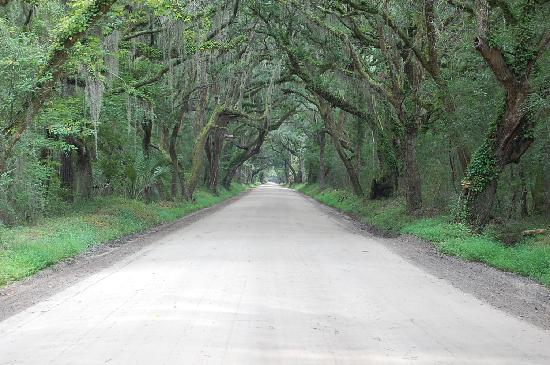 Edisto Island, Carolina Selatan: Road to Botany Bay
