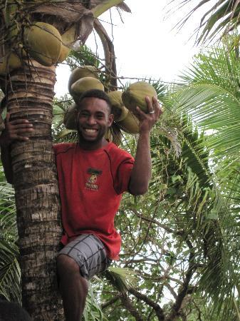 Uprising Beach Resort: One of the staff climbs up to get a coconut for our daughter