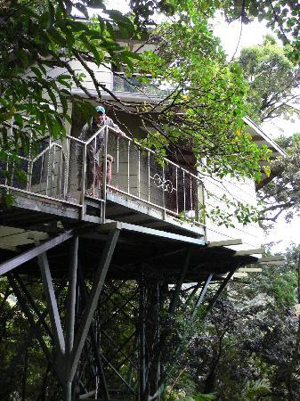 Photo 8 Hidden Canopy Treehouses Boutique Hotel & Room photo 1145237 Hidden Canopy Treehouses Boutique Hotel