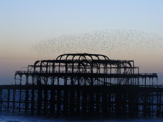 One Broad Street Guesthouse: starling event over west pier