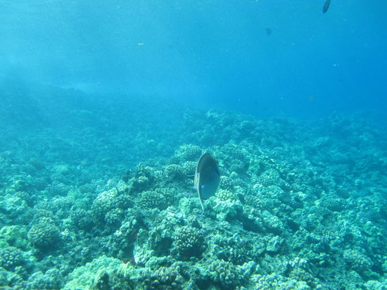 Kihei, HI: Snorkeling Reef&#39;s End