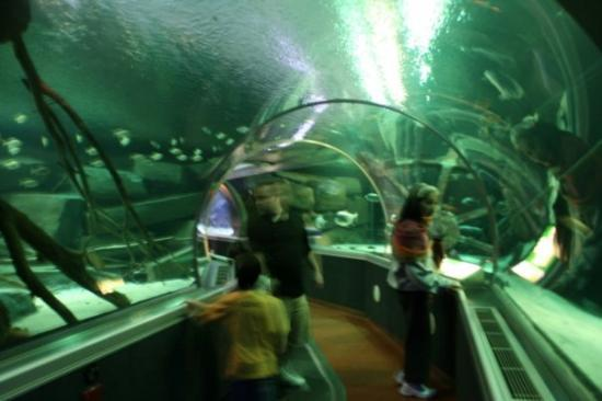 Underwater Adventure At Mall Of America Picture Of Sea