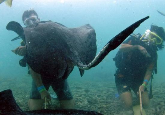 Ducking The Barb On This Large Stingray Picture Of Curacao Caribbean Tripadvisor