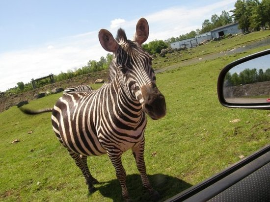 Park Safari Canada Zoo Quebec http://www.tripadvisor.com/Attraction_Review-g1468136-d592908-Reviews-Parc_Safari-Hemmingford_Quebec.html