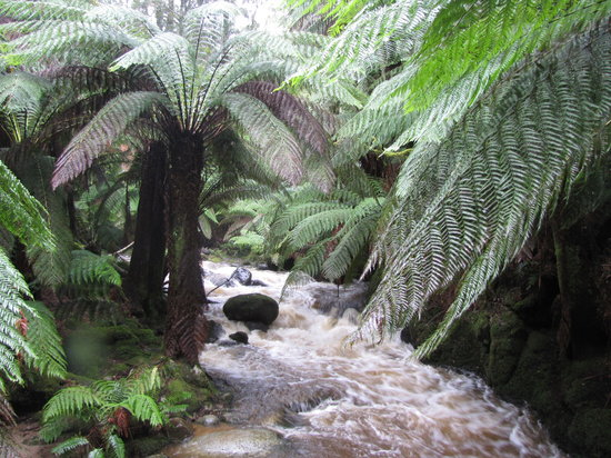 Tasmanien, Australien: After the rain - below St Columba Falls