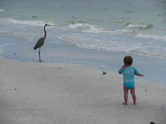 Indian Shores, FL: my daughter loved chasing the birds