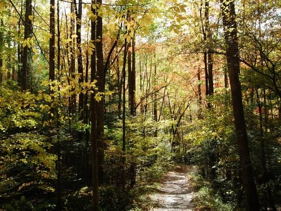 Tennessee: One of the many trails to hike.