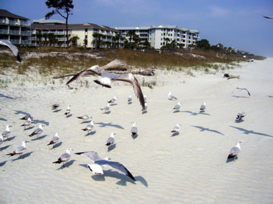 Hilton Head attractions