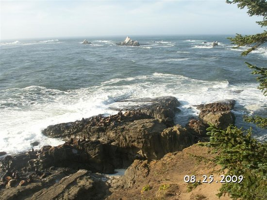Coos Bay, OR: View from Cape Arago