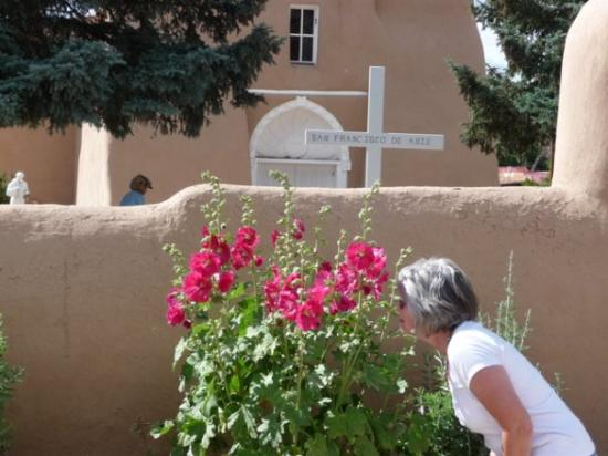 Hollyhock at Ranchos de Taos church