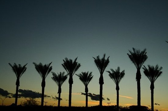 Scottsdale, AZ: Taken in in Arizona before the 2008 superbowl