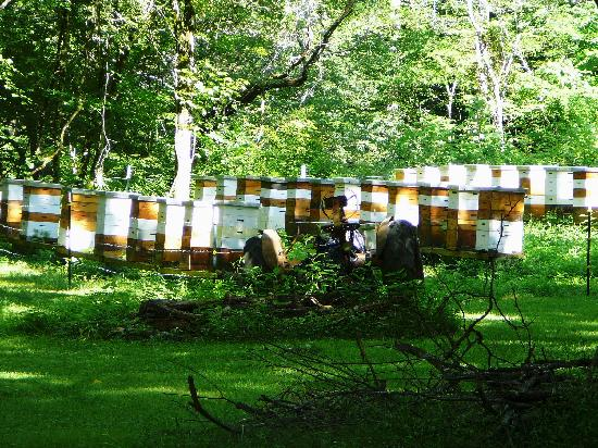 Bee Farm At Ely S Mill Local Honey Sales Picture Of Ely S Mill Gatlinburg Tripadvisor