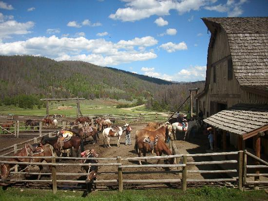 Granby, CO: Lots of horses to ride!