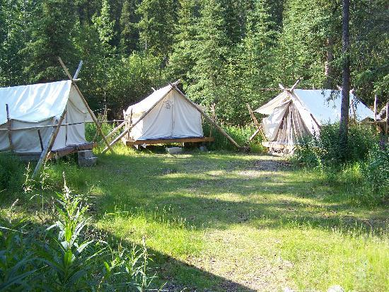 Platform Tents At Hostel Picture Of Denali Mountain