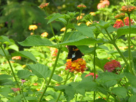 Raleigh, Carolina del Norte: butterfly garden in front of Inn