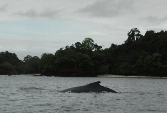 Seagullcove Lodge: Humpback Whale in one of the coves