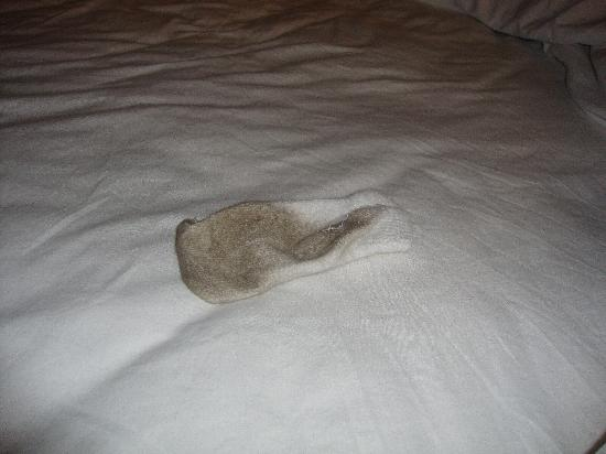 Oxford Suites Portland - Jantzen Beach: sock after 30 minutes of being in our room