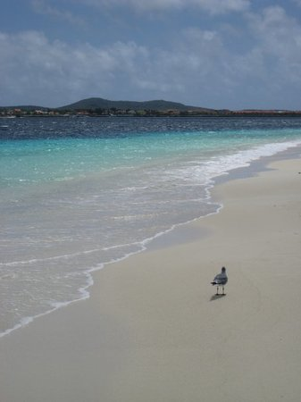 Bonaire Photo
