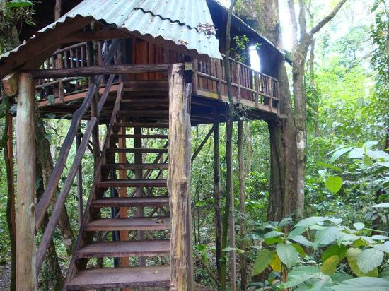Tree Houses Hotel Costa Rica : treehouse entrance 