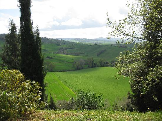 Agriturismo Cretaiole di Luciano Moricciani: The backyard view
