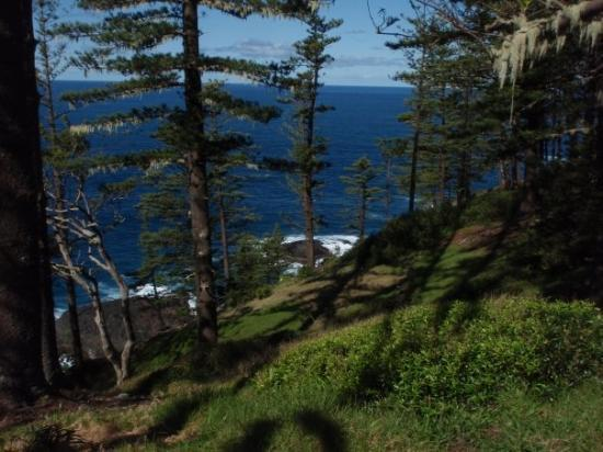 Burnt Pine Norfolk Island  City new picture : Norfolk Island Sunday Markets. Picture of Burnt Pine, Norfolk Island ...