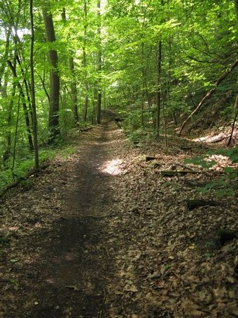 Beckley, Virginia Occidentale: The trail runs along an old rail bed, so remnants of the railway are visible most of the way.