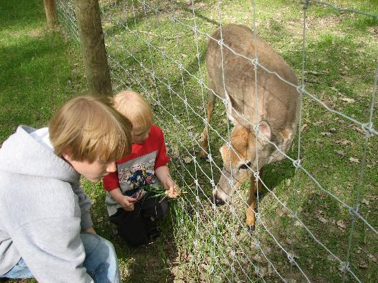 "Bismarck, Dakota du Nord : feeding the deer on the ""long"" walk"