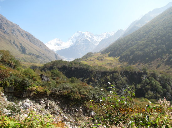 Joshimath India  city photo : Valley of Flowers National Park Uttarakhand Opiniones de Valley of ...