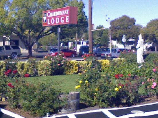 Chardonnay Lodge: In front of hotel, in parking lot.