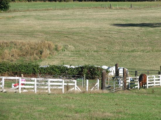 Three Gates Farm: Lovely pastures surrounding the B & B